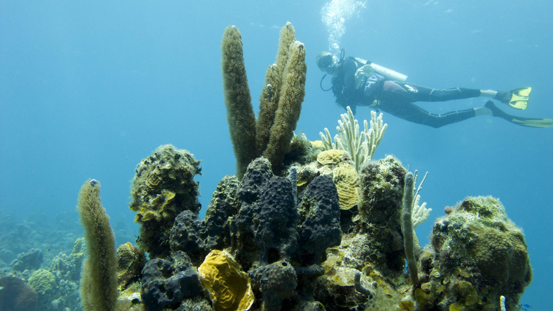 underwater-with-coral