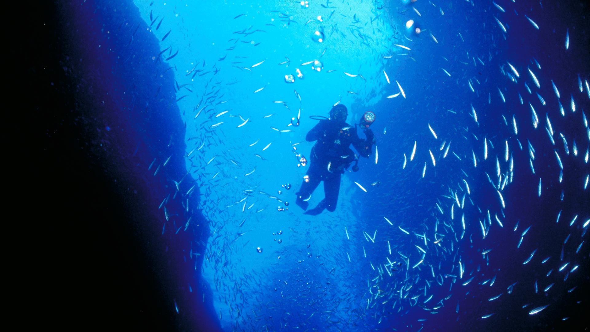 how to study marine biology