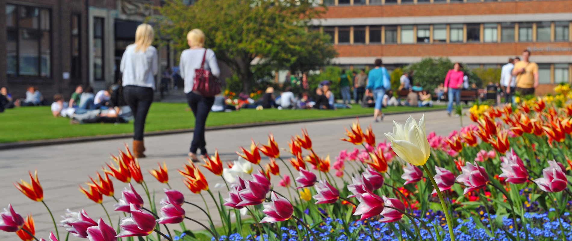Campus tulips in Spring